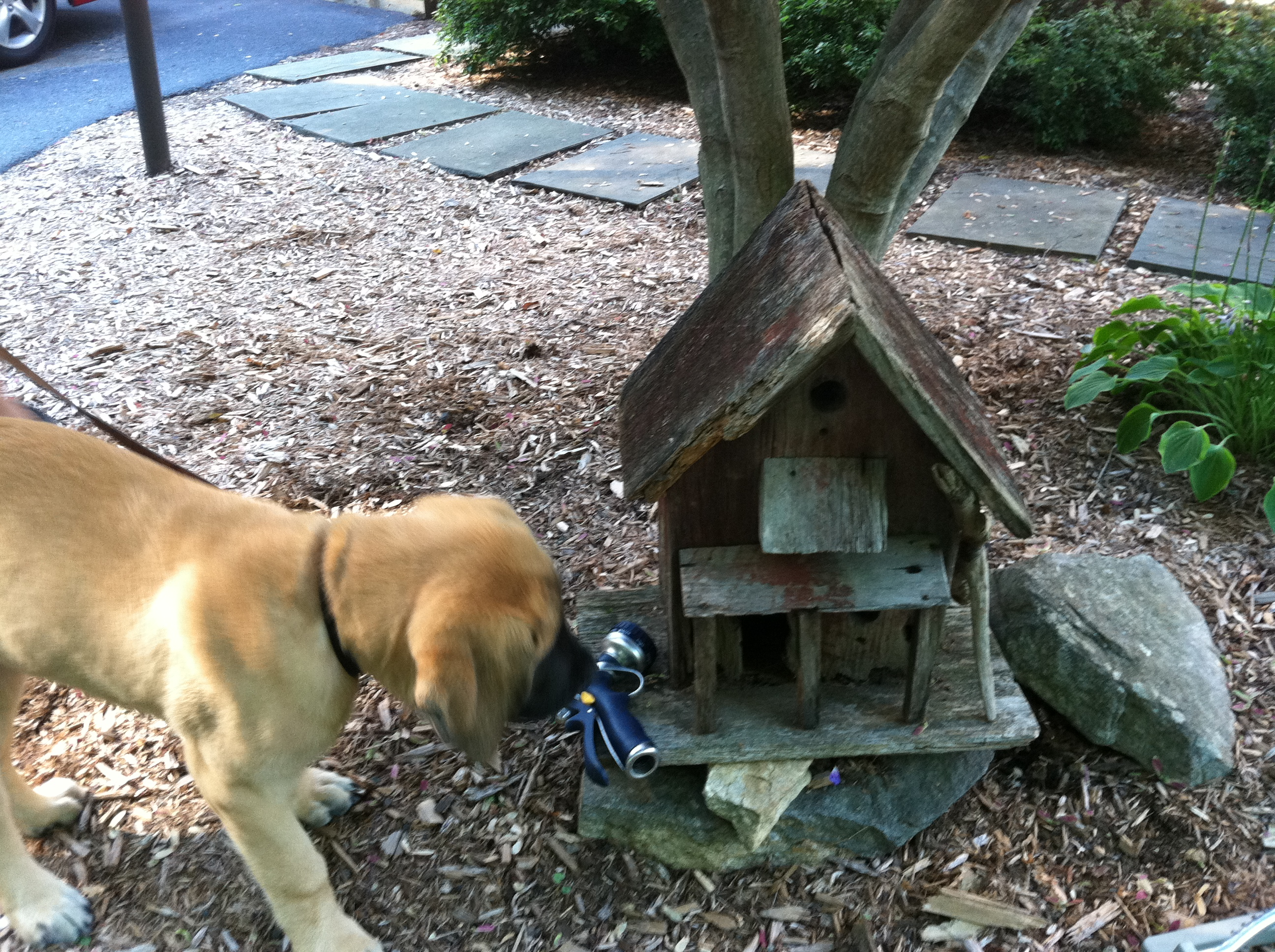 how to clean a backyard from dog poop