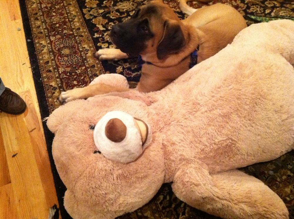 Win A Giant Teddy Bear! (2/2)