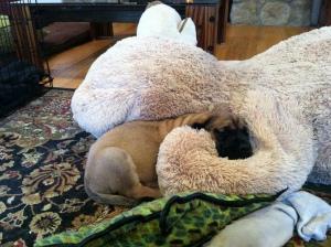 She took my Big Bear!