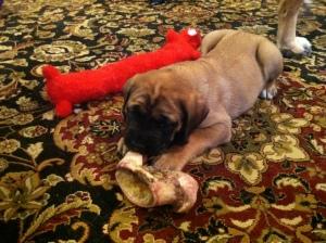 She took my bone